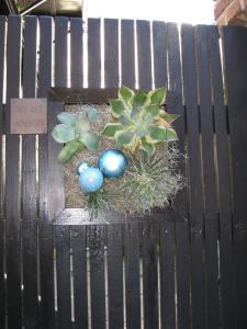 Thansgiving 2010 014
