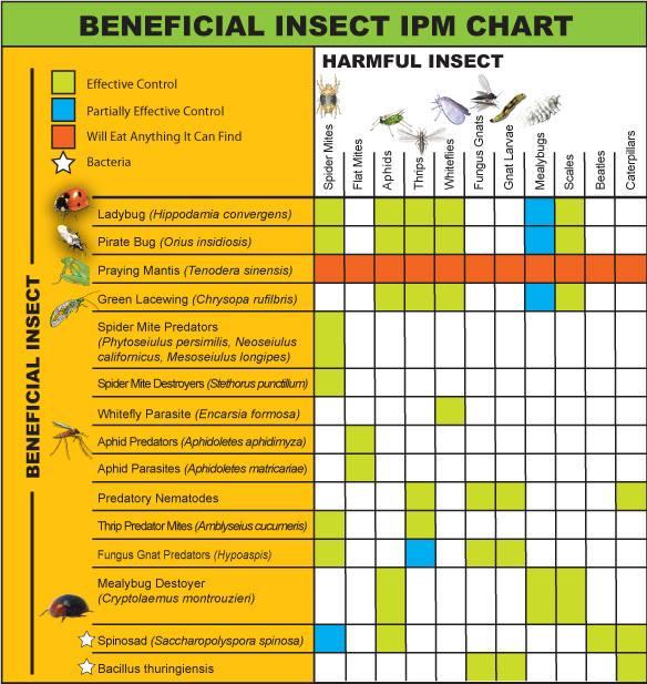 IPM chart