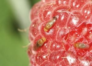 on-raspberry-1024x730