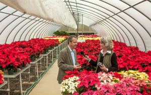 poinsettia interview