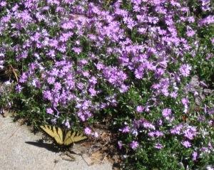 butterfly 004 crop