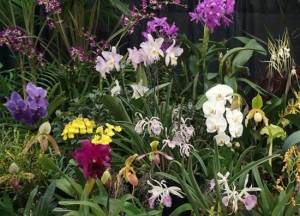 Triangle Orchid Society and Sarah P. Duke Gardens present a fall orchid show this weekend.