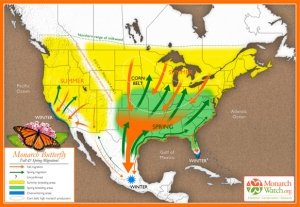 Migration map Credit: www.flightofthebutterflies.com
