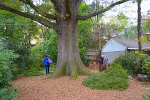 Winning Willow Oak with property owner, Robert Appleby and volunteer arborist Guy Meilleur