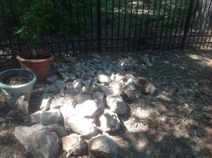 Cultivating a mature landscape bed by hand was hard work. I struggled to penetrate compacted soil, made contact with many tree roots, and excavated these rocks