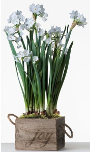 narcissus-from-easyto-grow-bulbs