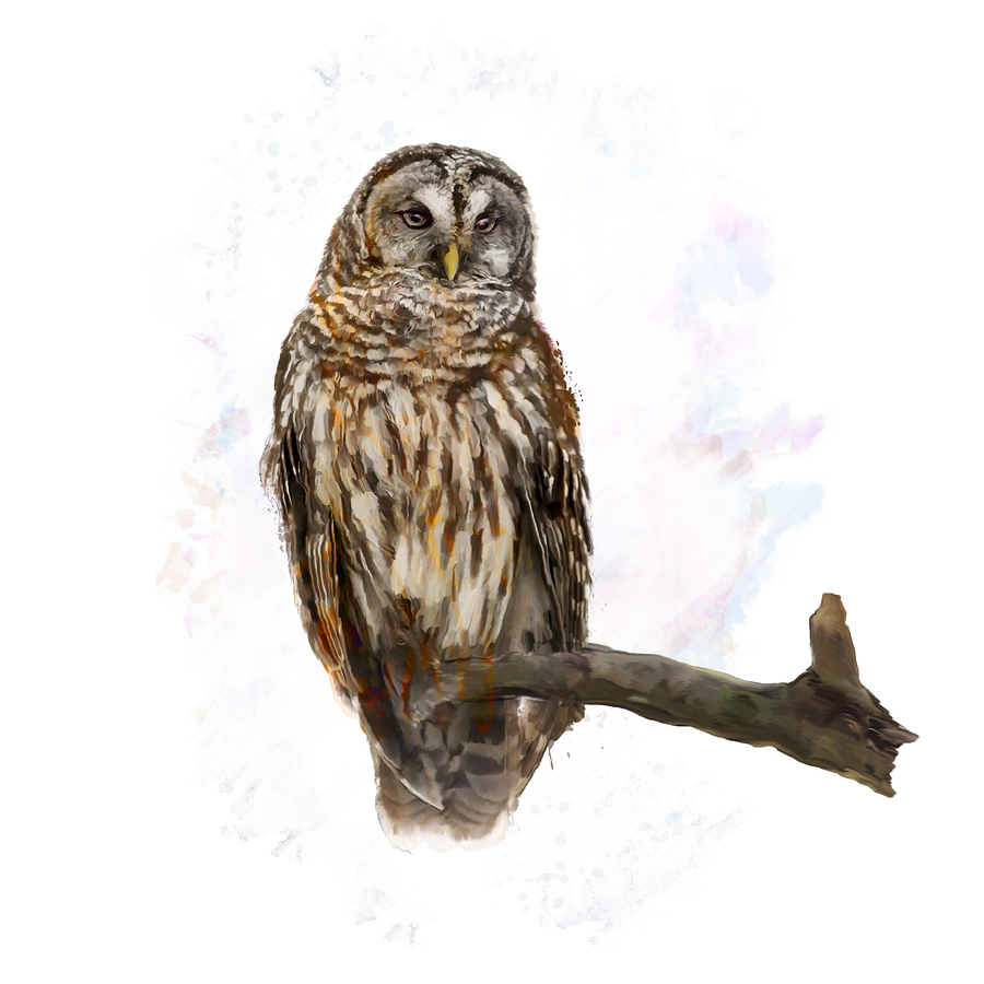Digital Painting of  Barred Owl perching