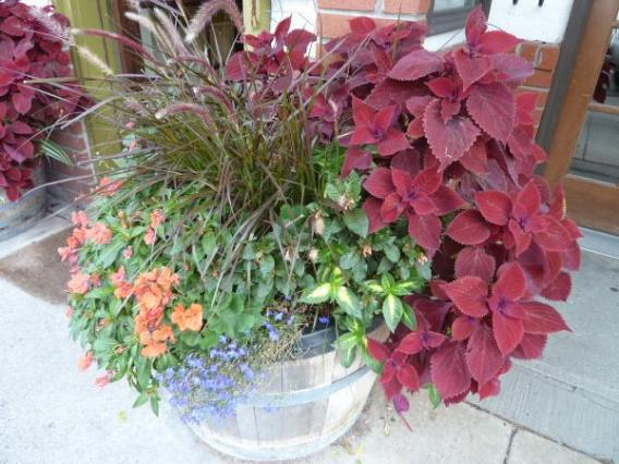 semiporus container kathleen_moore ccby20