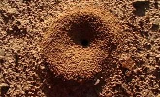 common ant mound