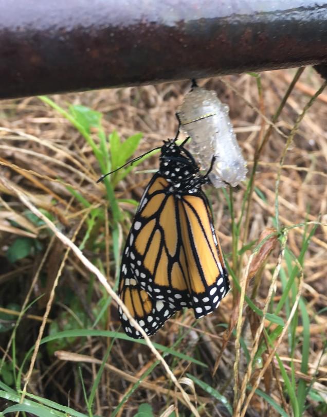 MonarchSept21.2