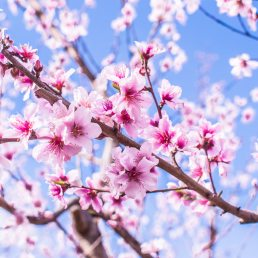 bloom-blossom-blue-sky-1505004